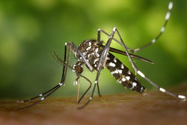 Zika Virus – Misure di prevenzione e controllo