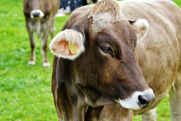Nota regionale – chiarimenti gestione positivi latte BRC e LBE
