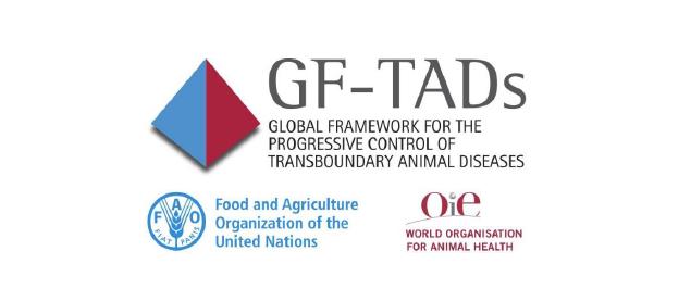 Peste Suina Africana: 13° incontro gruppo di esperti sulla situazione della malattia a livello globale