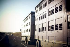 Normativa comunitaria in materia di benessere animale al trasporto